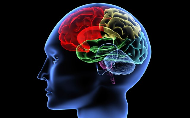 neurophysiology and learning